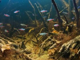 花鼠鱼的饲养窍门
